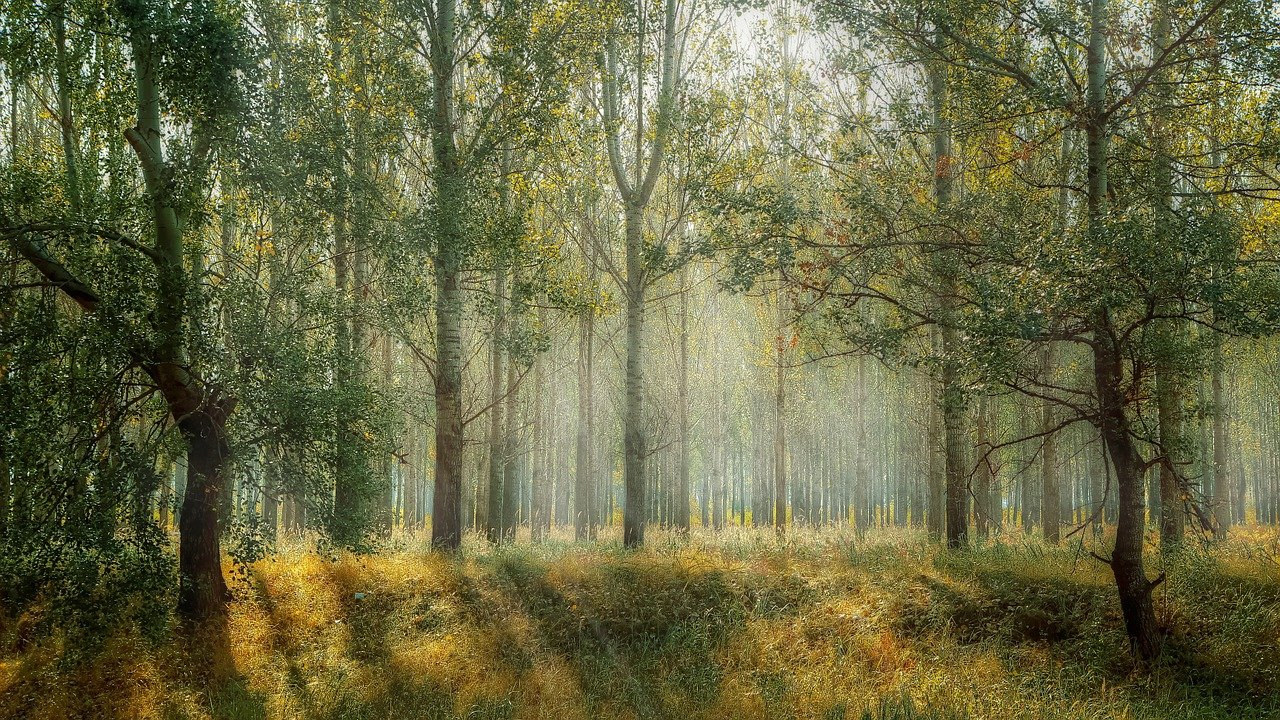 forest-1072828_1280